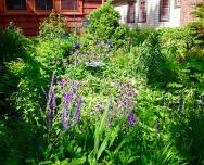 Front garden bed.