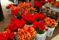 Tulips for sale!